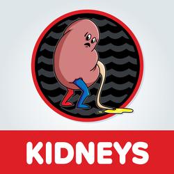 Kidneys Artwork