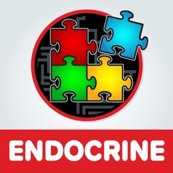 Endocrine Artwork